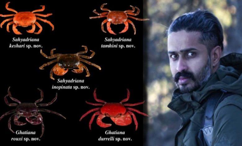 new species of crabs